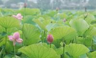 一年の半分オワタ - 千葉県いすみ環境と文化のさとセンター