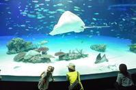 池袋サンシャイン水族館に行ってきた その2 - 「趣味はウォーキングでは無い」