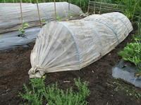 強風の中種蒔き植え付けets - 畑へ行こう♪