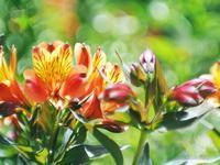 花壇のいろいろ - 光の音色を聞きながら Ⅳ