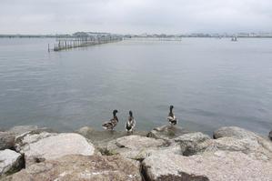 琵琶湖岸から -