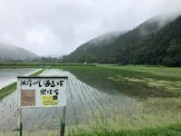 今日の田んぼ - 無農薬で米作りから酒造りを楽しむ会 blog