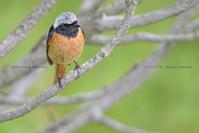 高原の様変わり_適応する冬小鳥 - healing-bird