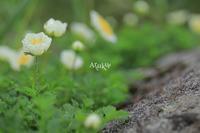日常と非日常 - Aruku