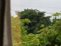 窓の外を見た結果 - うらさるーてのblog