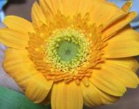 色んな所で花が咲いている。 - それでもやっぱりこんなカンジで
