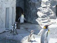 念願の旭山動物園 - うららフェルトライフ
