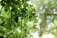 """植物を学ぶ旅in 英国 - 英国メディカルハーバリスト&アロマセラピストのブログ""""Herbal Healing 別館"""""""