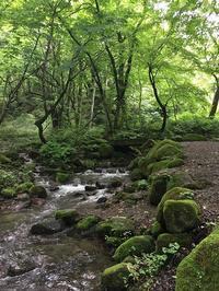 木谷沢渓流 - よもやま日記書いてます。