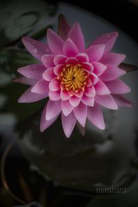 残り3日となりました*花の写真展「つむぐ」in横浜 - MIRU'S PHOTO