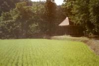 Accumulation of light -田舎の想い出- - jinsnap(weblog on a snap shot)