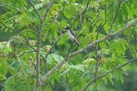 雨の合間に里山へPart2 - 近隣の野鳥を探して