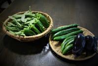 北摂「初夏の家庭菜園」野菜の収穫 - 今夜の夕食