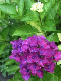 完全オフ日を作り肩の力を抜きました - お花に囲まれて