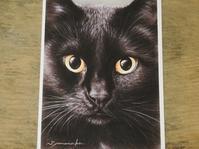 新着~山中翔之郎さんのポストカード~ - 湘南藤沢 猫ものの店と小さなギャラリー  山猫屋