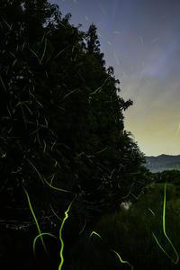 再びフラれる - Tom's starry sky & landscape
