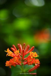 # オレンジ色の花、キセキレイ - Green+Pink