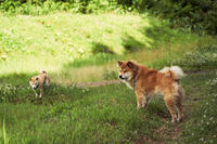 sakura&waku(4cut) 秋田の散歩 -     ~風に乗って~    Present