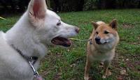 現役の猟犬なもので - 小太郎の白っぽい世界