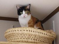 猫のお留守番 みーたんちゃん編。 - ゆきねこ猫家族
