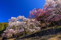 桜咲く奈良2019山寺・悟眞寺の春 - 花景色-K.W.C. PhotoBlog