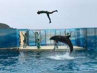 湘南モノレールで行く江ノ島、新江ノ島水族館新江ノ島水族館空中イルカショー - ブリキの箱