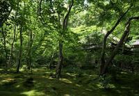 祇王寺2 - Patrappi annex