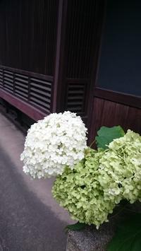 マンモグラフィ - Tea's room  あっと Japan