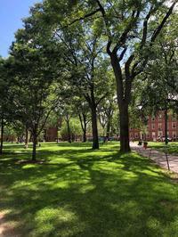 ハーバード大学ローレンシャンスクール特別プログラムのご案内 - ローレンシャンスクールの南山小学校受験対策