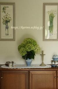 カットした紫陽花を家で楽しむ可愛いモナルダ♪ - miyorinの秘密のお庭