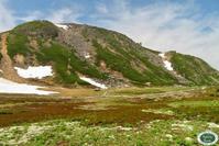 乗鞍岳はお花の季節へ〜 - 乗鞍高原カフェ&バー スプリングバンクの日記②