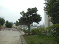 どんぐり成長中 - 台町公園ブログ