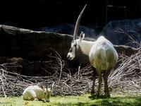 お母さんと一緒 - 動物園放浪記