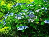 紫陽花を見れるテラス - 風の香に誘われて 風景のふぉと缶