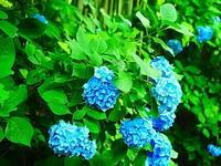鎌倉梅雨の青 - 風の香に誘われて 風景のふぉと缶