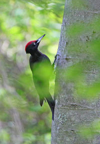 北海道初日はこの鳥でした。 - 季節の野鳥~Wildbirds archives