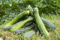 野菜の歴史 - 良え畝のブログ