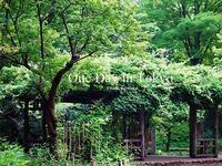 緑したたる、One Day in Tokyo - Cucina ACCA