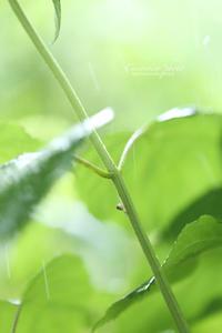 **キミニフル雨** - こころいろ*photo