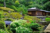 鎌倉海蔵寺半夏生 - 暮らしを紡ぐ