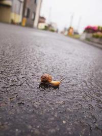 7月3日今日の写真 - ainosatoブログ02