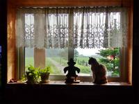 ネコちゃんも憂鬱かな・・・ - 浦佐地域づくり協議会のブログ