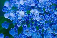 花の色 - ナナイロノート