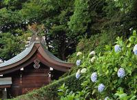 吉備津神社の紫陽花 - つれづれ日記