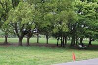 葛飾区水元公園+森林浴を愉しむ。 - 一場の写真 / 足立区リフォーム館・頑張る会社ブログ