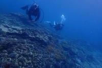 19.7.4宜野湾攻め、で。 - 沖縄本島 島んちゅガイドの『ダイビング日誌』
