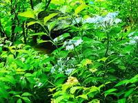 梅雨の庭 - 風の香に誘われて 風景のふぉと缶