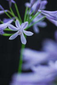 家の花 - 花と風景 Photo blog