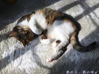 猫の惑星 - あの日、あの味。
