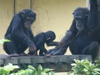 4コマで伝わる[京都市動物園] - a diary of primates